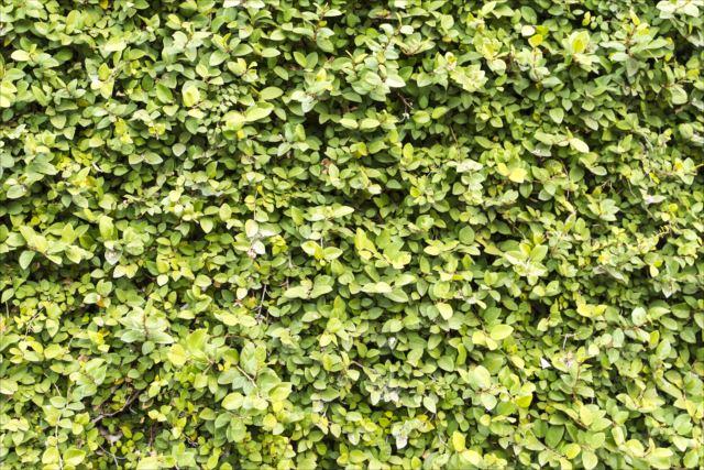 こまめな剪定が長持ちのコツ!壁面緑化のお手入れ方法を学ぼう!